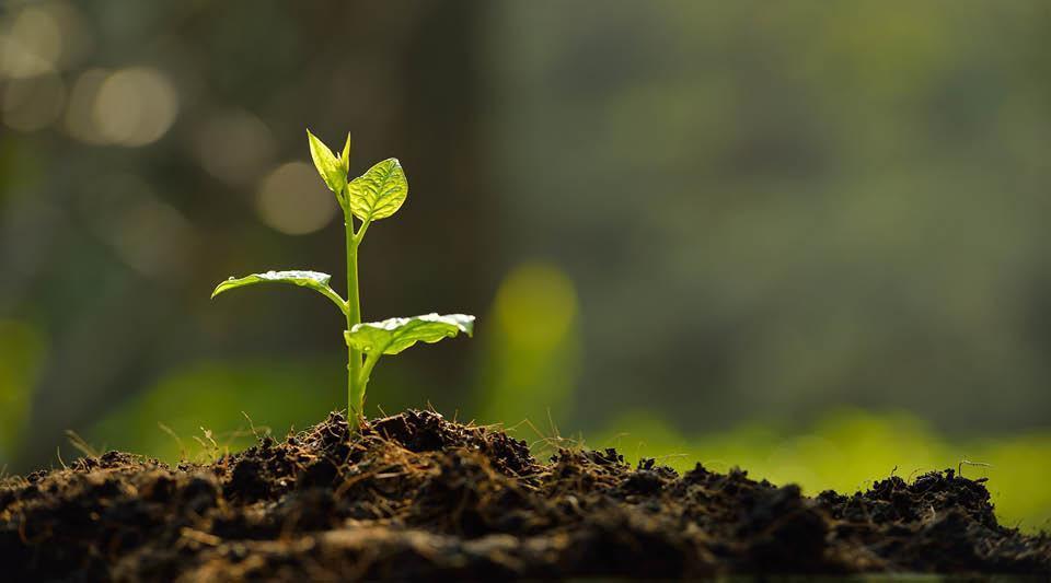 Forum Développement durable et responsabilité sociétale